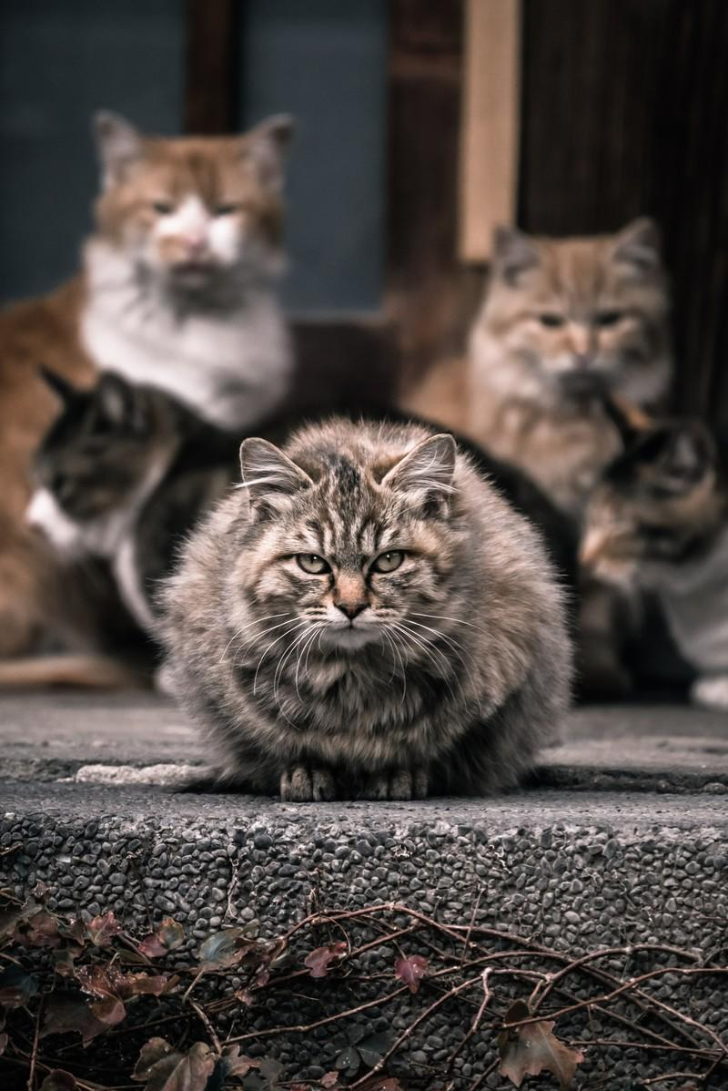 軒先に集まる野良猫たちの写真