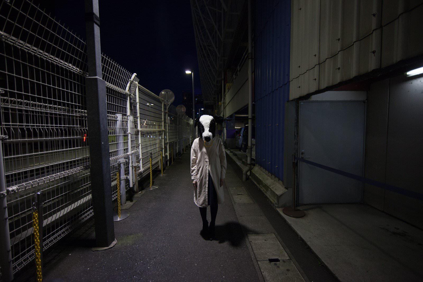路上でエト牛と遭遇の写真