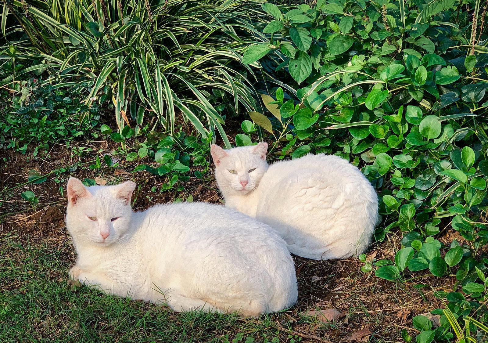 白猫二匹の写真