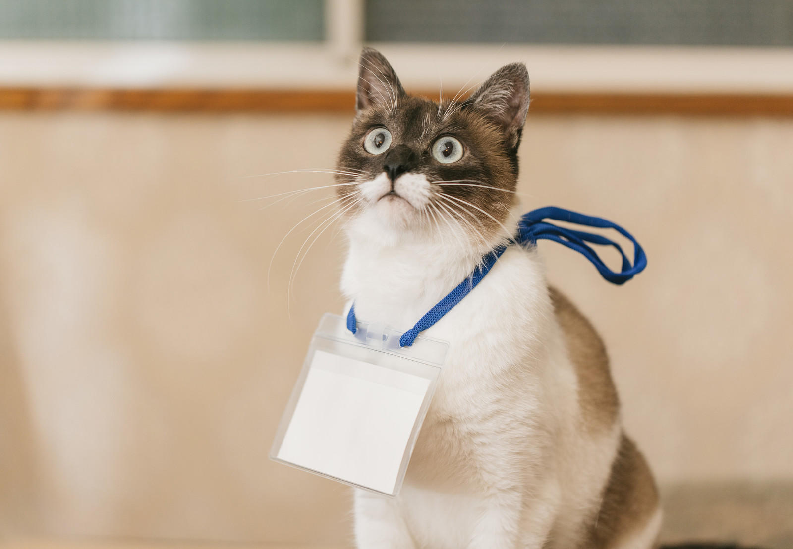 名札をつけた猫ちゃんの写真の写真