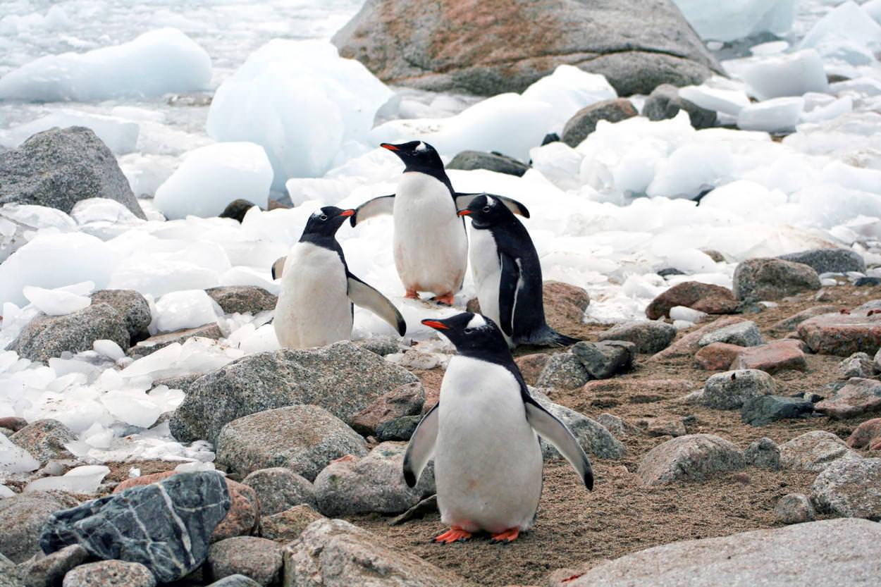 ペンギン4匹の写真