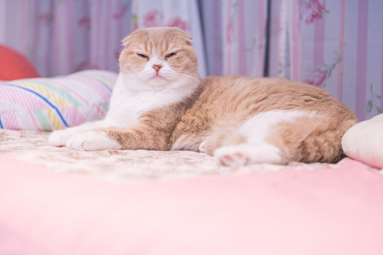 ものすごく軽蔑な眼差しの猫の写真