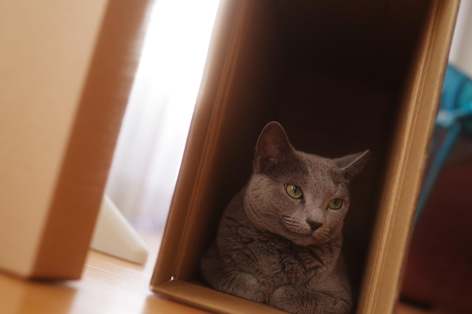 箱猫の写真